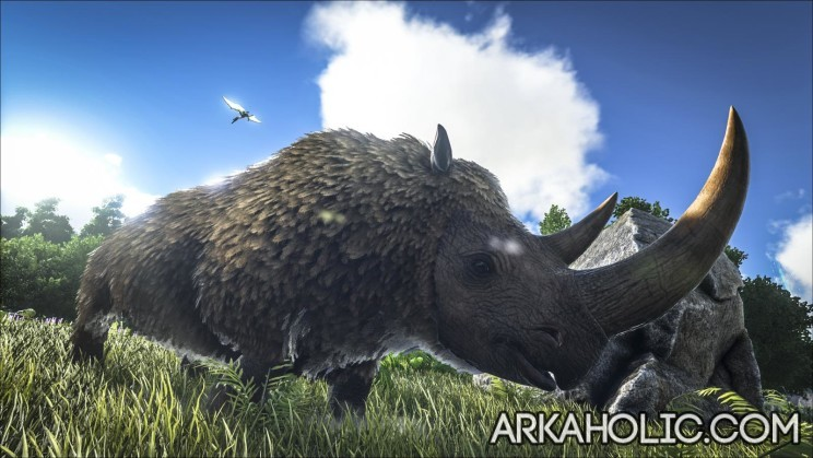 Woolly Rhino 2